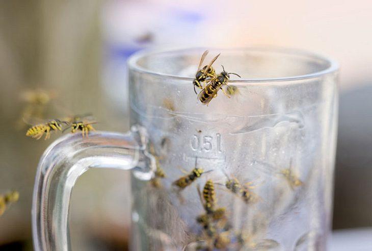 Wespen bekämpfen.