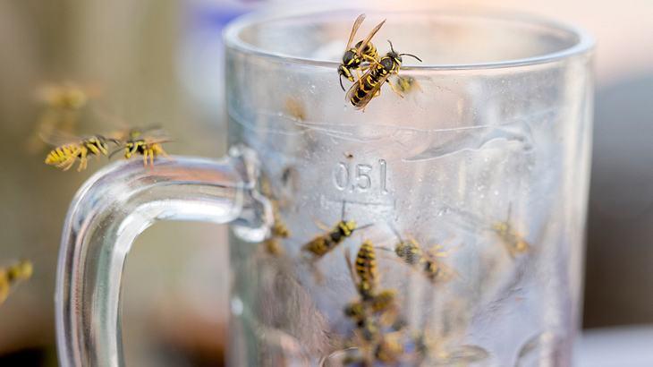 Mit diesem einfachen Trick hältst du dir jede Wespe vom Leib