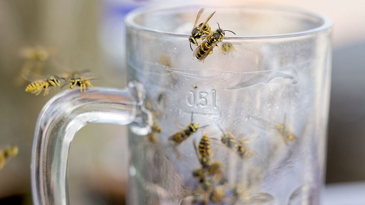 Wespen bekämpfen: 7 Hausmittel, die Wespen garantiert fernhalten - Foto: iStock / RelaxFoto.de