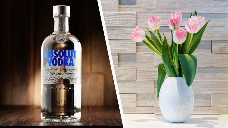 Wodka hilft Blumen