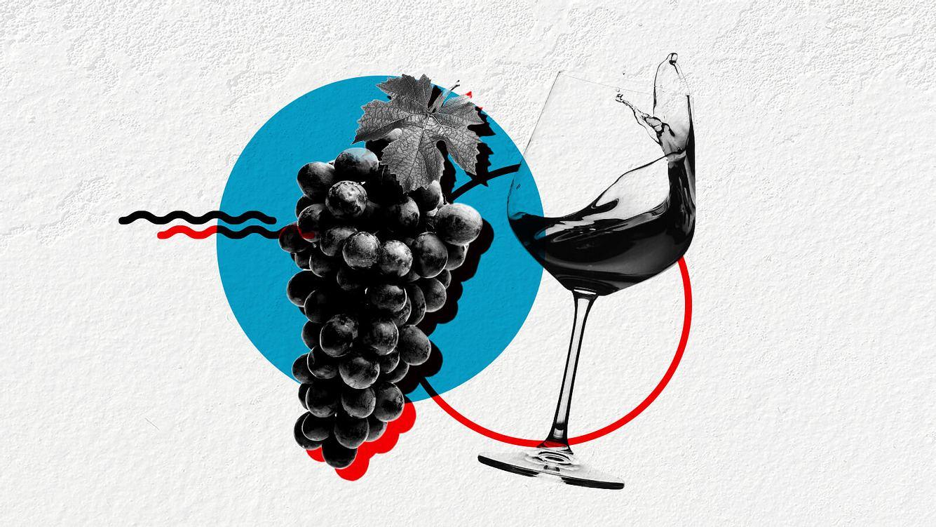 Ein Glas Wein und eine Weinrebe