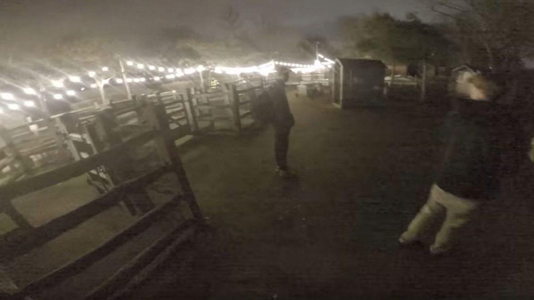 YouTuber brechen nachts in Zoo ein - Polizei-Großeinsatz