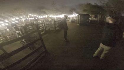 YouTuber brechen nachts in Zoo ein - Polizei-Großeinsatz - Foto: Screenshot YouTube/Ally Law