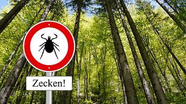 Achtung, Zecken! - Foto: istock