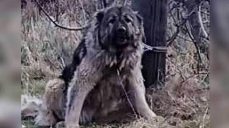 Der Zottel-Hund wurde ausgesetzt und von der Polizei erschossen